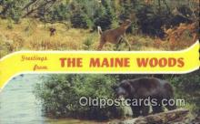 ber001735 - Greetings from the Maine Woods, Bear Postcard Post Card Old Vintage Antique