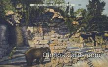 ber001739 - Forest Park Zoo St. Louis MO, USA, Bear Postcard Post Card Old Vintage Antique