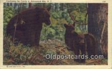 ber001745 - Adirondack Mountains, NY USA , Bear Postcard Post Card Old Vintage Antique