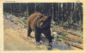 ber001746 - A Hitch-Hiker, Bear Postcard Post Card Old Vintage Antique