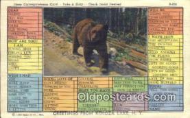 ber001747 - Greetings from Kenoza Lake NY, USA, Bear Postcard Post Card Old Vintage Antique