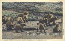 ber001749 - Otter Creek Feeding Ground, Yellowstone Park, Wyoming, USA, Bear Postcard Post Card Old Vintage Antique