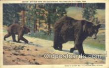 ber001750 - Yellowstone National Park, Bear Postcard Post Card Old Vintage Antique