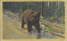 ber001751 - White Mountains New Hampshire, USA, Bear Postcard Post Card Old Vintage Antique