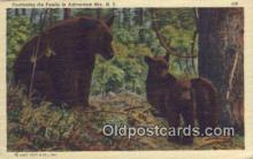 ber001752 - Adirondack Mts. NY USA, Bear Postcard Post Card Old Vintage Antique
