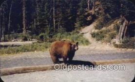 ber001753 - Brown Bear, Bear Postcard Post Card Old Vintage Antique