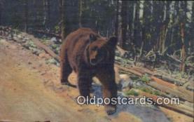 ber001756 - Bear Postcard Post Card Old Vintage Antique