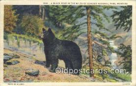 ber001757 - Glacier National Park, Montana, USA, Bear Postcard Post Card Old Vintage Antique