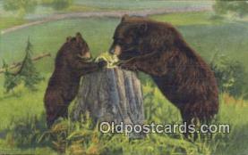ber001758 - Bear Postcard Post Card Old Vintage Antique