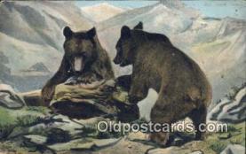 ber001760 - Bear Postcard Post Card Old Vintage Antique