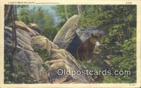 ber001762 - Bear Postcard Post Card Old Vintage Antique