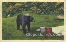 ber001764 - Lunch Time in Maine, Bear Postcard Post Card Old Vintage Antique