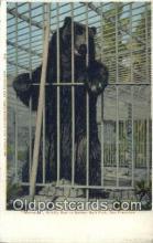 ber001768 - Monarch, Golden Gate Park, San Francisco, CA USA, Bear Postcard Post Card Old Vintage Antique