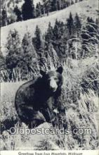 ber001770 - Iron Mountain, Michigan, USA, Bear Postcard Post Card Old Vintage Antique