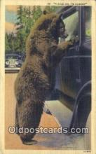 ber001776 - Bear Postcard Post Card Old Vintage Antique
