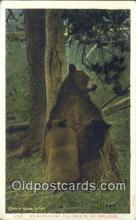 ber001778 - Yellowstone, National Park, Wyoming, USA, Bear Postcard Post Card Old Vintage Antique