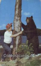 ber001782 - Feeding Bruin, Bear Postcard Post Card Old Vintage Antique