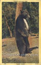 ber001783 - Yosemite National Park, Bear Postcard Post Card Old Vintage Antique
