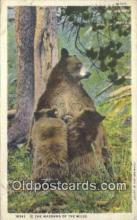 ber001785 - Madonna of the Wild, Bear Postcard Post Card Old Vintage Antique