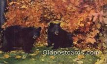 ber001790 - Bear Postcard Post Card Old Vintage Antique