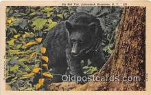 ber002061 - Big Bad B'ar Adirondack Mountains, NY Postcard Post Card