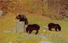 ber002062 - Black Bears Pocono Mountains Postcard Post Card