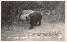 ber002079 - Brown Bear  Postcard Post Card