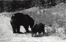 ber002081 - Northwoods Bear Sayner, Wisconsin Postcard Post Card