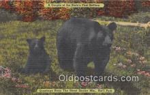 ber002096 - Great Smoky Mountains National Park Postcard Post Card