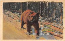 ber002097 - Adirondack Mountains, NY Postcard Post Card