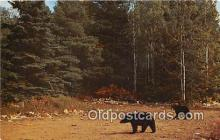 ber002103 - Black Bear Copper Country, Michigan Postcard Post Card