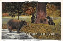ber002107 - Yosemite National Park Postcard Post Card