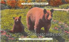 ber002108 - Adirondack Mountains, NY Postcard Post Card