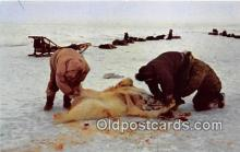ber002116 - Eskimos Skinning a Polar Bear Alaska Postcard Post Card
