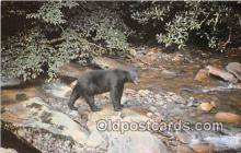 ber002120 - Black Bear Great Smoky Mountains National Park Postcard Post Card