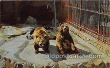 ber002127 - Grizzly Bear Roeding Park Zoo, Fresno Postcard Post Card