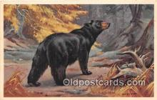 ber002128 - Black Bear Wildlife Resources Postcard Post Card