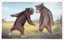 ber002137 - Fighting Bears Alaska Postcard Post Card