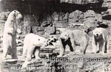 ber002139 - Polar Bears, Zoo St Louis Postcard Post Card