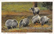 ber002152 - Grizzly Bear Family Yellowstone Park Postcard Post Card
