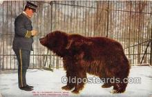 ber002164 - Alaskan Brown Bear New York Zoological Park Postcard Post Card