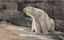 ber002165 - Polar Bear New York Zoological Park Postcard Post Card