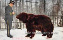 ber002168 - Alaskan Brown Bear New York Zoological Park Postcard Post Card