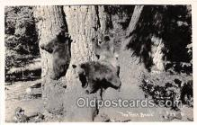 ber002169 - The Three Bears  Postcard Post Card
