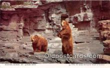 ber002172 - Kodiak Bears St Louis Zoo Postcard Post Card