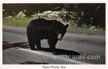 ber002173 - Copper Country Bear  Postcard Post Card