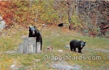 ber002175 - Bears Having Lunch  Postcard Post Card