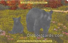 ber002180 - Great Smoky Mountains National Park Postcard Post Card