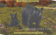ber002181 - Great Smoky Mountains National Park Postcard Post Card