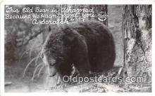 ber002183 - Old Bear  Postcard Post Card